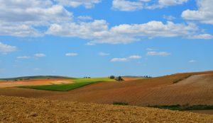 Soft lands — Alcarria Baja, 2013