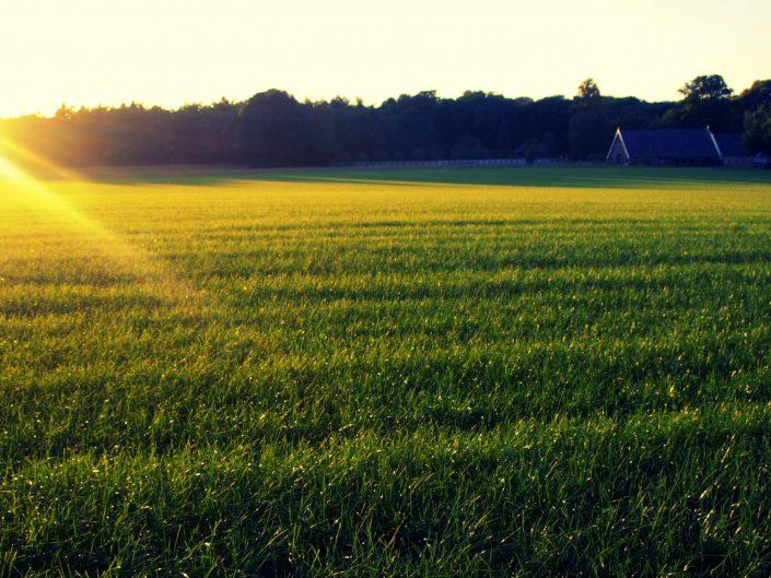 Green sunset — Apeldoorn, 2014