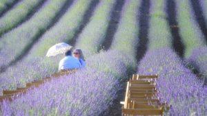 Lavender chat — Brihuega, 2018