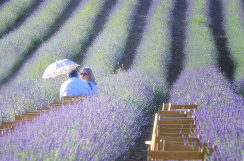 Inmersion in the lavender fields