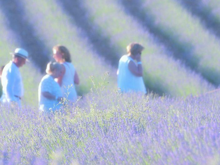 The lavender road — Brihuega, 2018