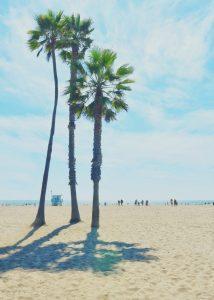 Sand, Sun and Palm Trees — Santa Monica, 2018