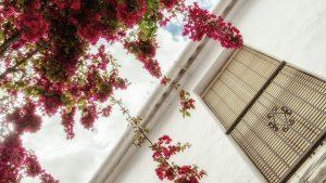 Flower power — Granada, 2019
